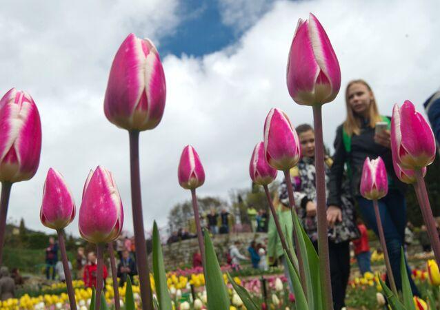 Le défilé des tulipes au Jardin botanique Nikitski