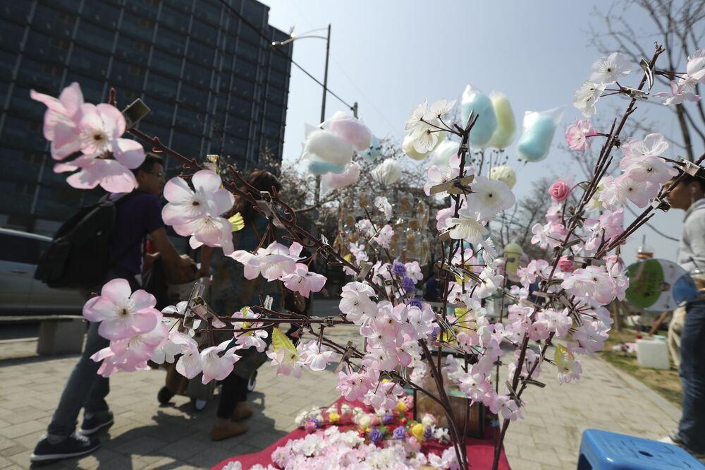 Les cerisiers en fleurs en Corée