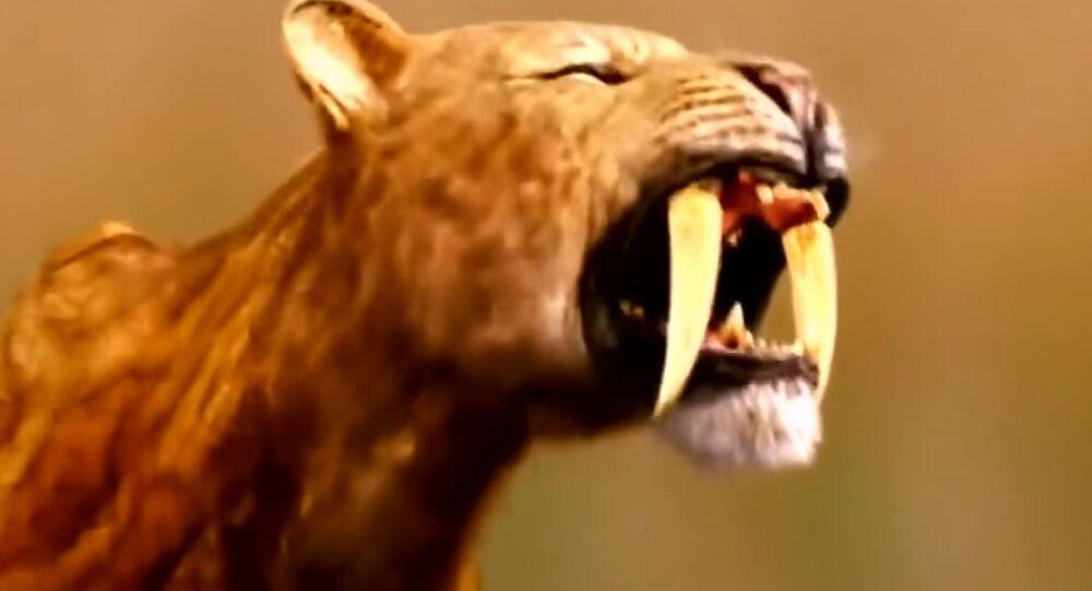 Un crâne de tigre à dents de sabre retrouvé en Allemagne