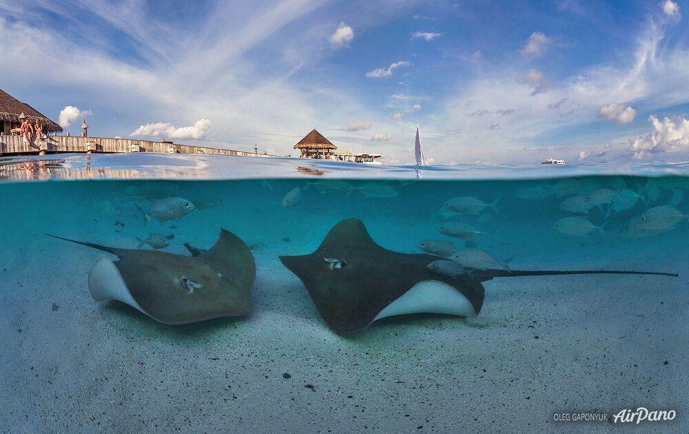 L'univers sous-marin des Maldives