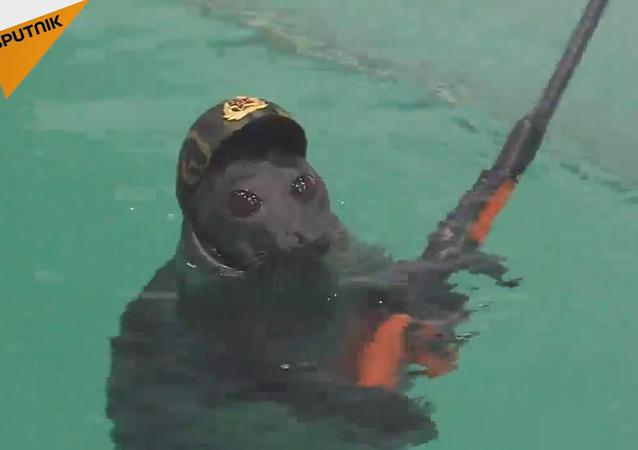 Des phoques russes se préparent au Jour de la Victoire