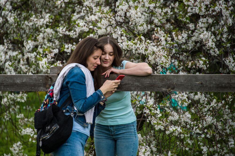 Les pommiers en fleurs à Moscou