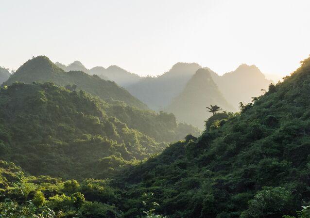 Forêts vietnamiennes