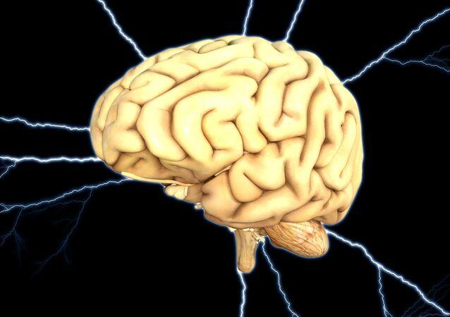 Cerveau humain (image d'illustration)