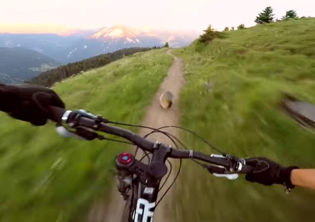 Une course épique: cycliste vs marmotte