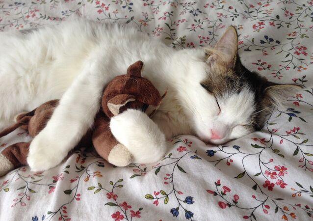 Un chat en train de dormir