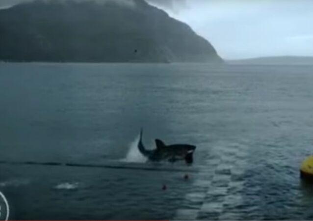 Phelps VS Shark Full Race