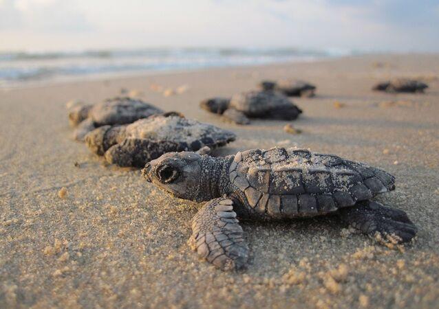 Une tortue de mer