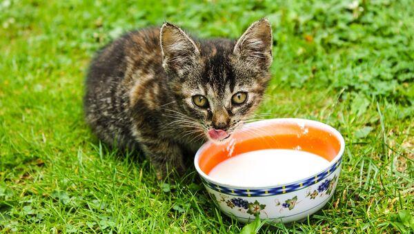 Un chaton - Sputnik France