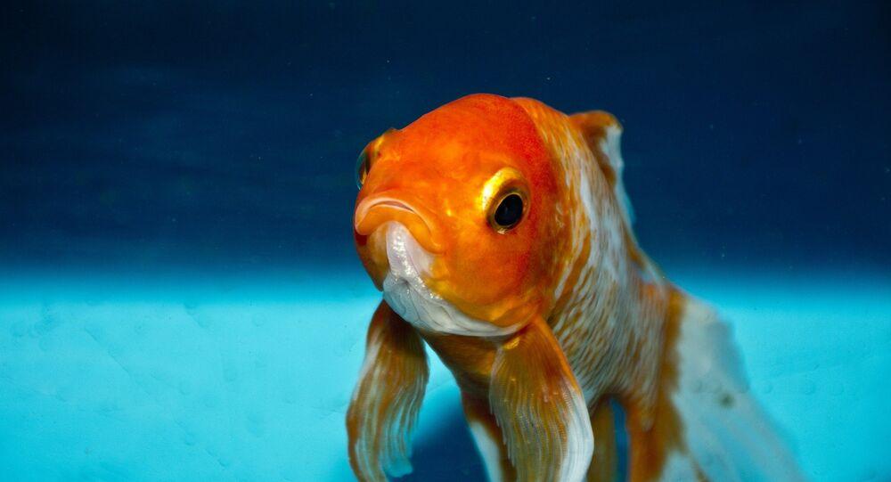 La beauté des créatures marines