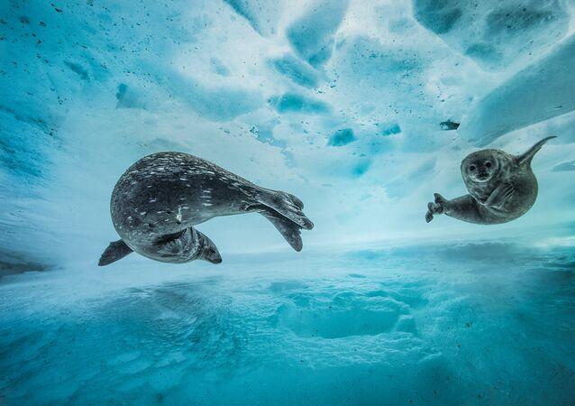 Les plus belles photos de la nature sauvage