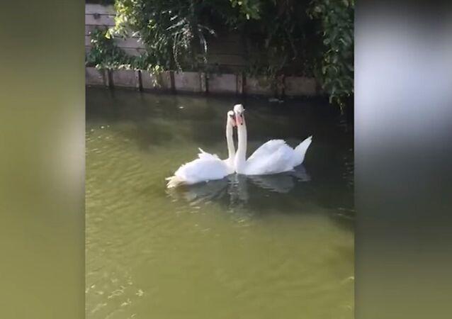 Un «couple d'amoureux» fête sa réunion!