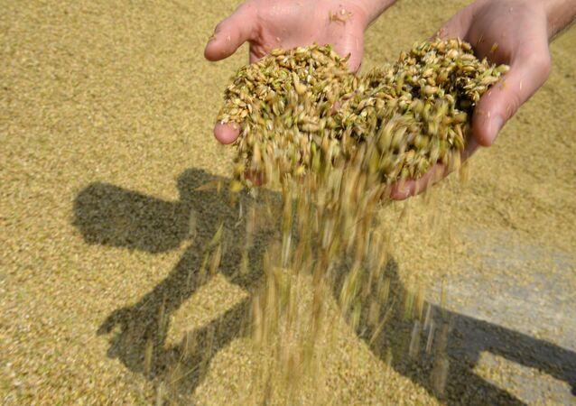 Céréales (image d'illustration)