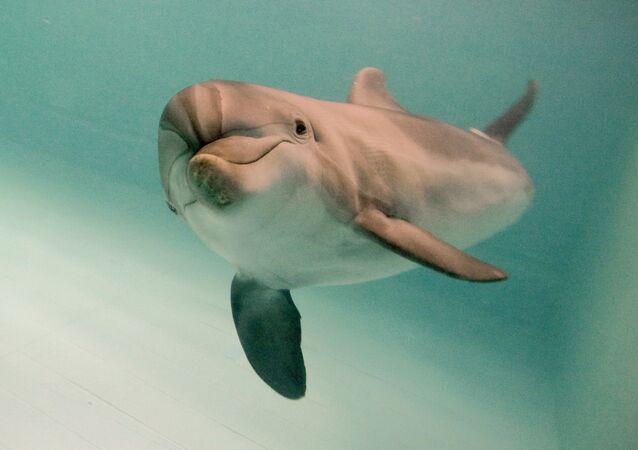 Ce qui s'est passé en réalité avec les dauphins de combat ukrainiens