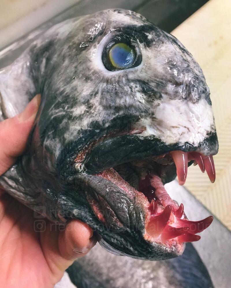 Des créatures extraordinaires et effrayantes venues des profondeurs des océans