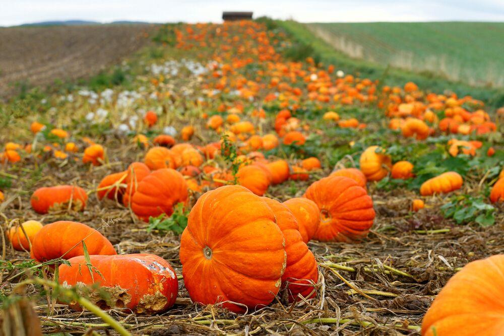 L'automne dans différents pays du monde