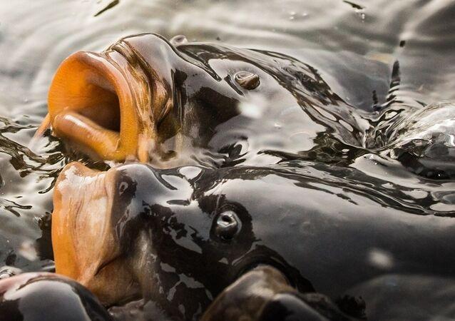 Des poissons. Image d'illustration