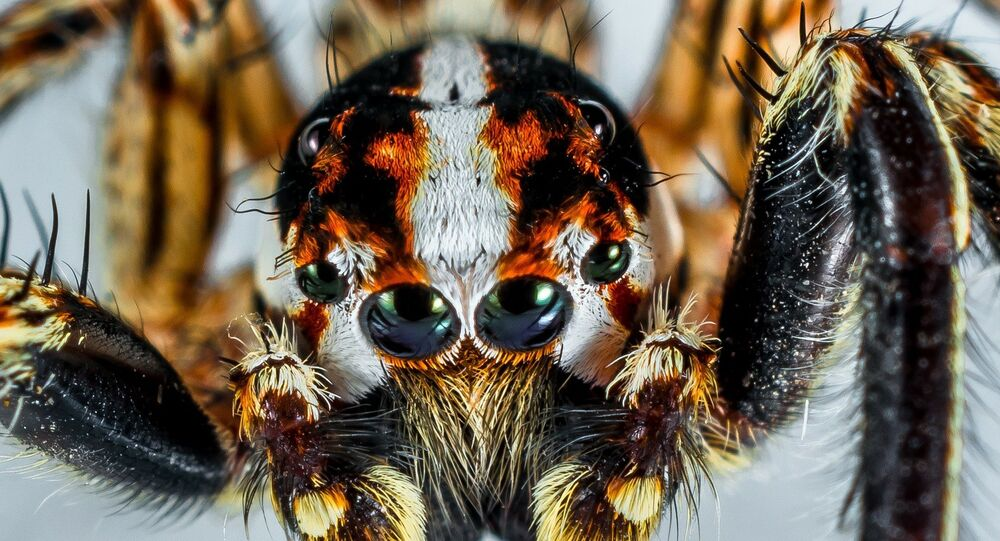 araignée, image d'illustration