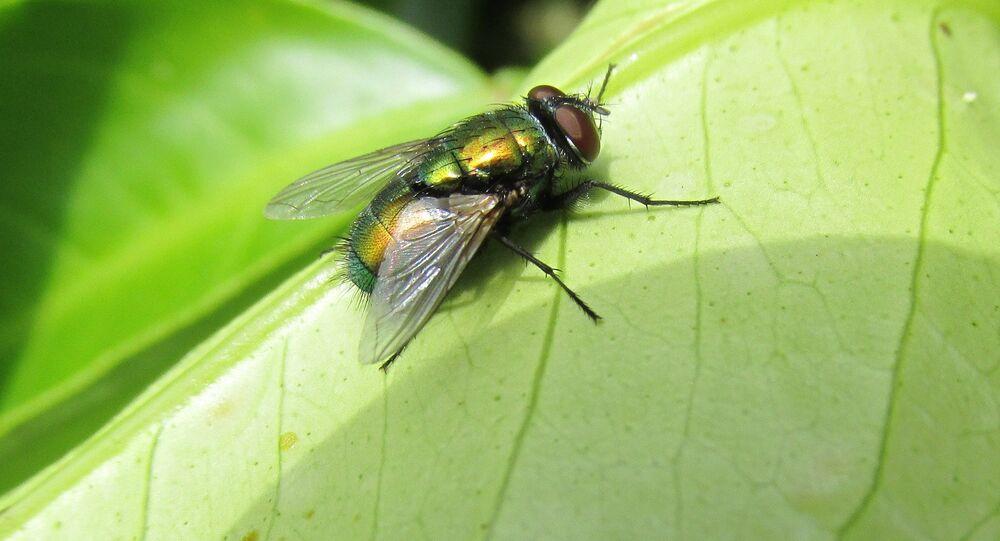 Une mouche (image d'illustration)