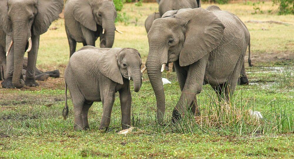 Une famille d'éléphants