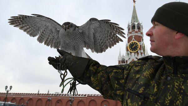 Les oiseaux gardiens du Kremlin - Sputnik France