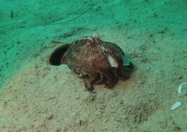 L'octopode sort ses poubelles