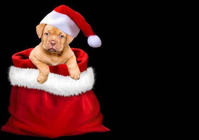 Un chiot de Noël