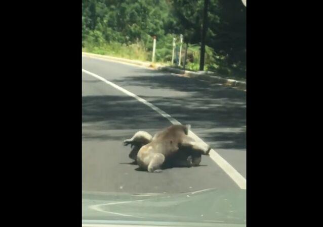 Nouveaux dangers de la route