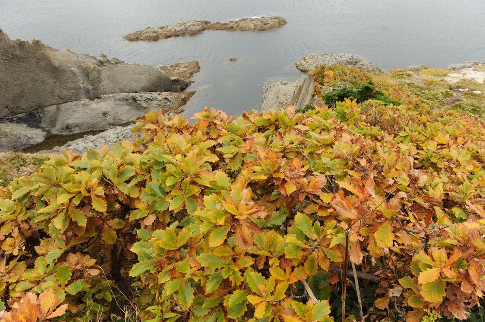 La Perle noire des îles Kouriles: l'île de Kounachir