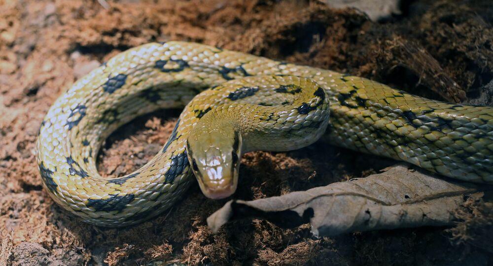 Serpent (Image d'illustration)