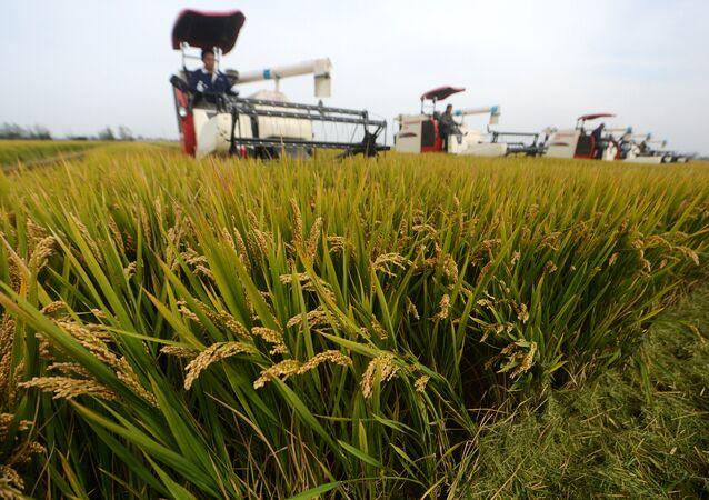 riz, Chine