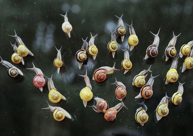 Quand un mollusque se trouve une maison sous la peau d'un bras d'un garçon / image d'illustration