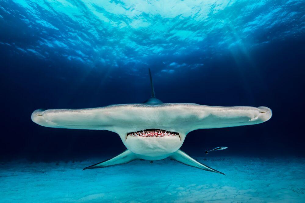 Gagnants du concours de photographie sous-marine Underwater Photographer of the Year 2018