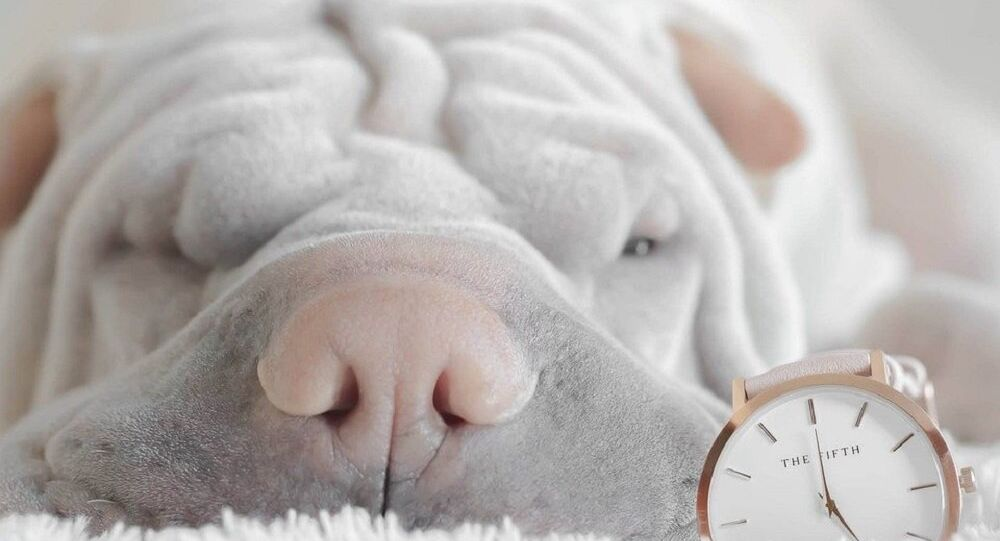 Un chien endormi