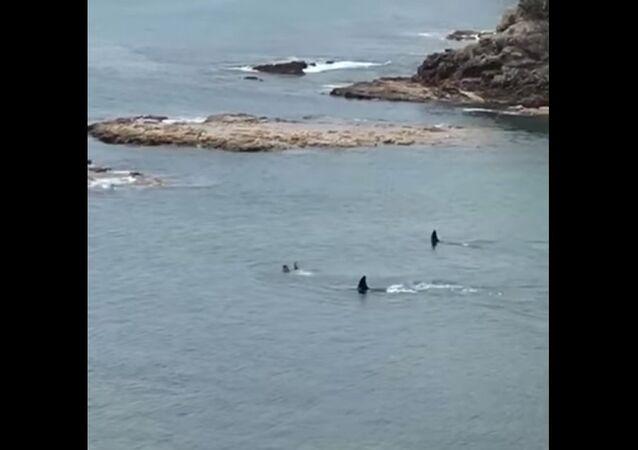 Deux orques contre deux garçons