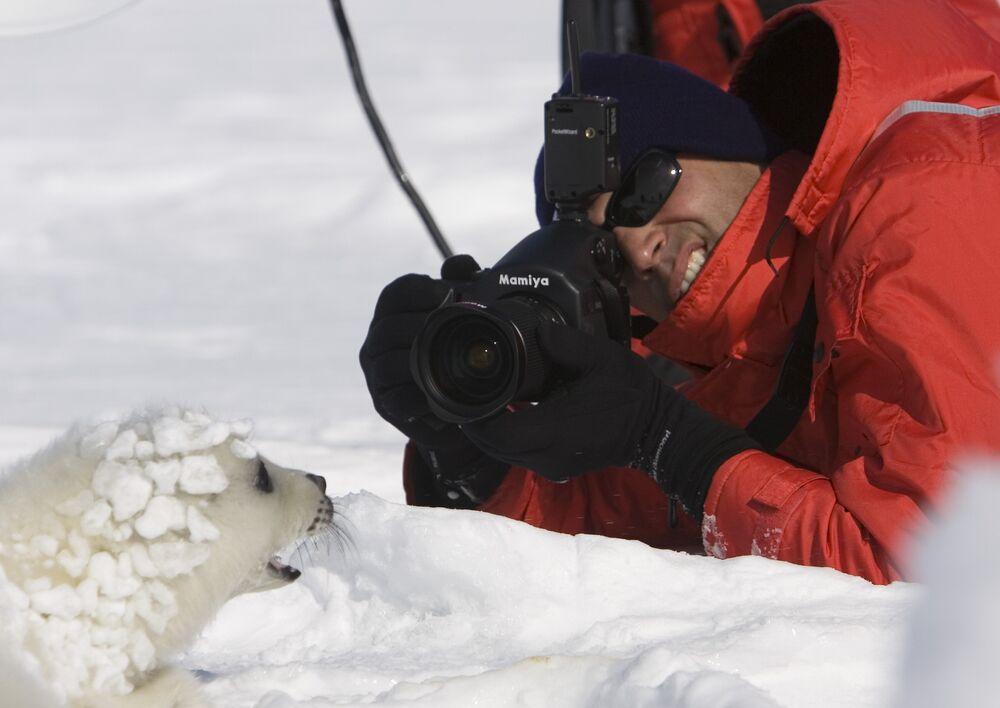 Photographe de mode et juge du Next Top Model d'Amérique, Nigel Barker photographie un phoque du Groenland