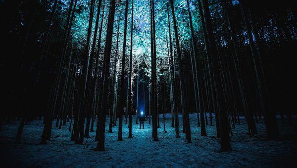 forêt - Sputnik France