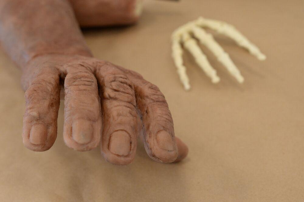 Reconstitution sculptée d'une main d'Homo naledi (auteur – Anatoli Alexandrov) et moulage des os d'un poignet d'Homo naledi obtenu par impression 3D