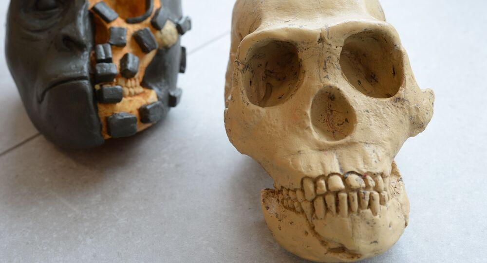 Démonstration de la méthode de reconstitution d'un crâne