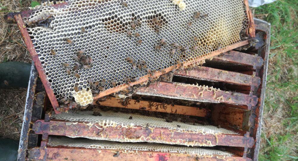 En Ariège, un cocktail de substances chimiques tue 2 millions d'abeilles