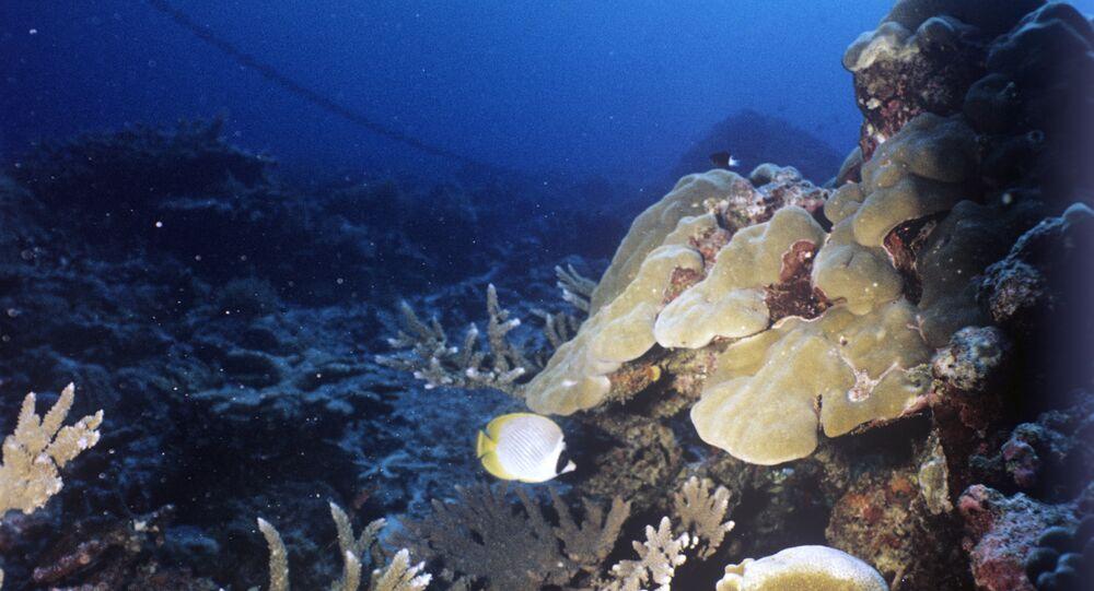 Un récif corallien