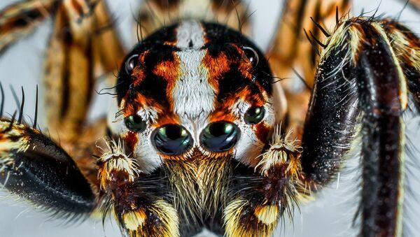 Des hordes d'araignées sur une autoroute aux USA (image d'illustration) - Sputnik France