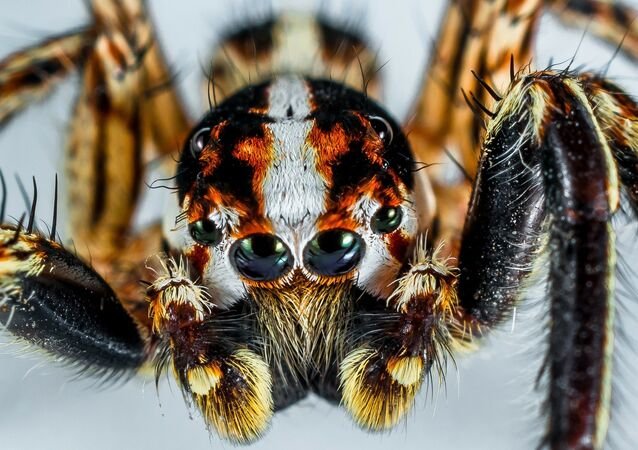 Des hordes d'araignées sur une autoroute aux USA (image d'illustration)