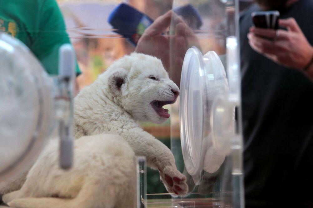 Nouvelles naissances dans le parc safari Taïgan en Crimée