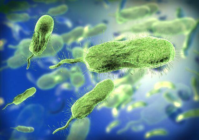 bactéries, image d'illustration