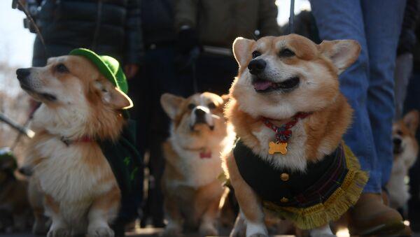 Les chiens à Moscou - Sputnik France