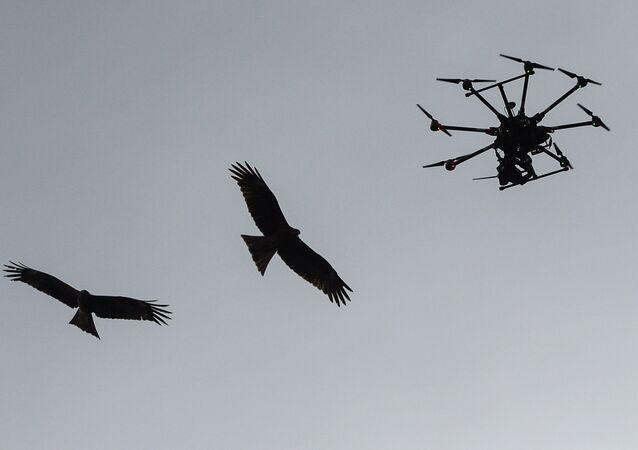 Drone et oiseau