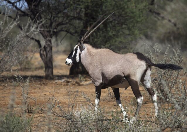 Une antilope / image d'illustration