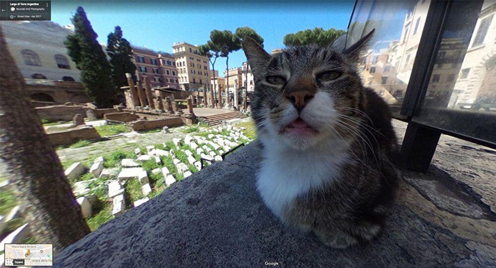 Immortalisé par Google Maps, ce chat devient viral