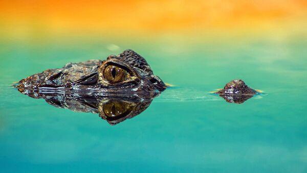 crocodile - Sputnik France
